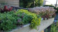 Green roof with sedums.