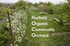Horfield Organic Community Orchard in blossom