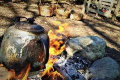 Cooking on an open fire in the woods and foraging walk