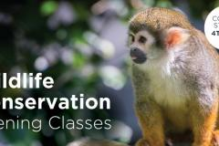Wildlife Conservation Evening Classes - May