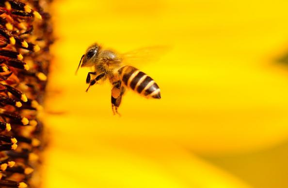 Bees, Arctic ice and record breaking solar panels - our